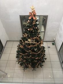 2019\'メリークリスマスから!_d0091909_11570531.jpg