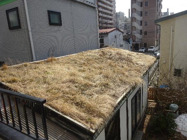 屋根緑化(草屋根)の今年一年を振り返る。_f0105112_04213408.jpg