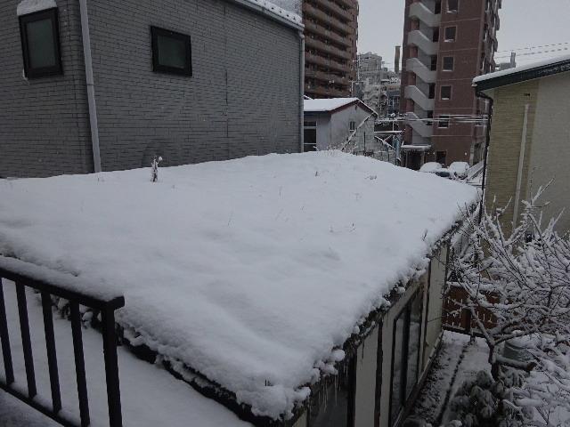 屋根緑化(草屋根)の今年一年を振り返る。_f0105112_04213445.jpg