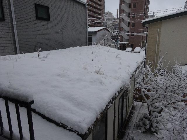 屋根緑化(草屋根)の今年一年を振り返る。_f0105112_04213459.jpg