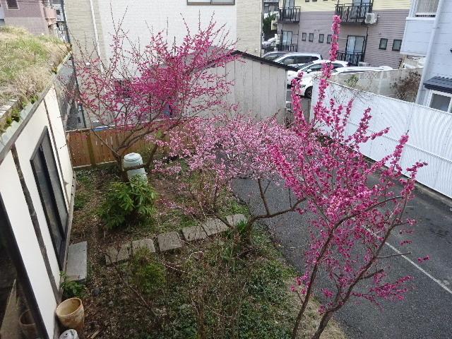 屋根緑化(草屋根)の今年一年を振り返る。_f0105112_04261821.jpg