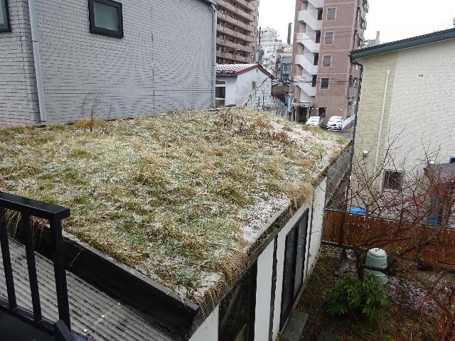 屋根緑化(草屋根)の今年一年を振り返る。_f0105112_04261831.jpg