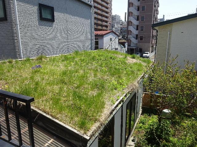 屋根緑化(草屋根)の今年一年を振り返る。_f0105112_04303630.jpg