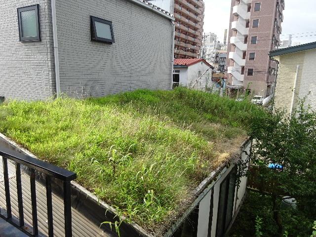 屋根緑化(草屋根)の今年一年を振り返る。_f0105112_04303655.jpg