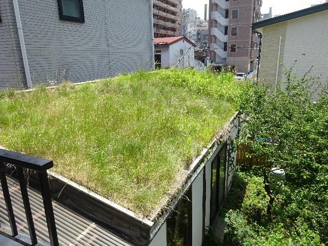 屋根緑化(草屋根)の今年一年を振り返る。_f0105112_04303668.jpg