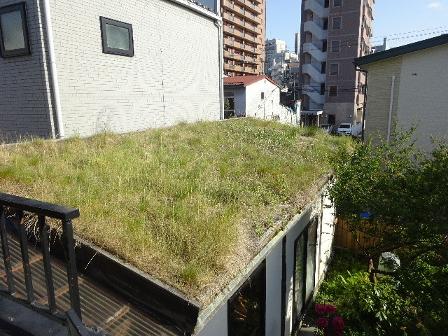 屋根緑化(草屋根)の今年一年を振り返る。_f0105112_04303698.jpg