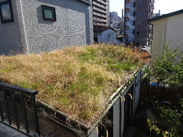 屋根緑化(草屋根)の今年一年を振り返る。_f0105112_04355307.jpg