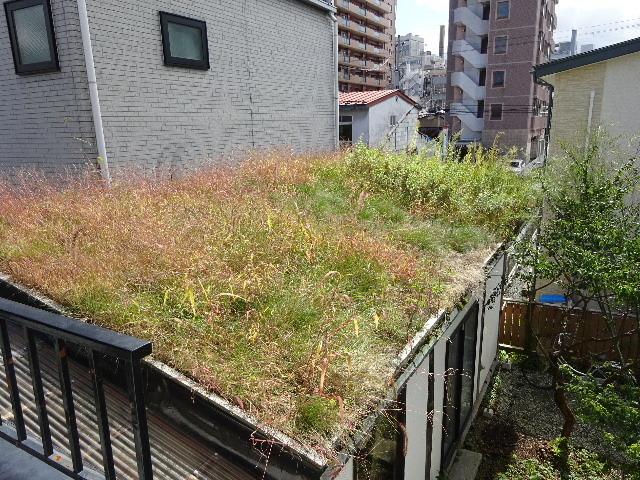 屋根緑化(草屋根)の今年一年を振り返る。_f0105112_04355316.jpg