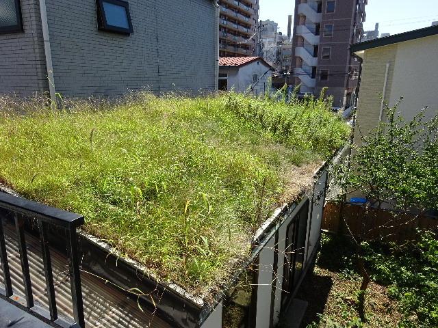 屋根緑化(草屋根)の今年一年を振り返る。_f0105112_04355329.jpg