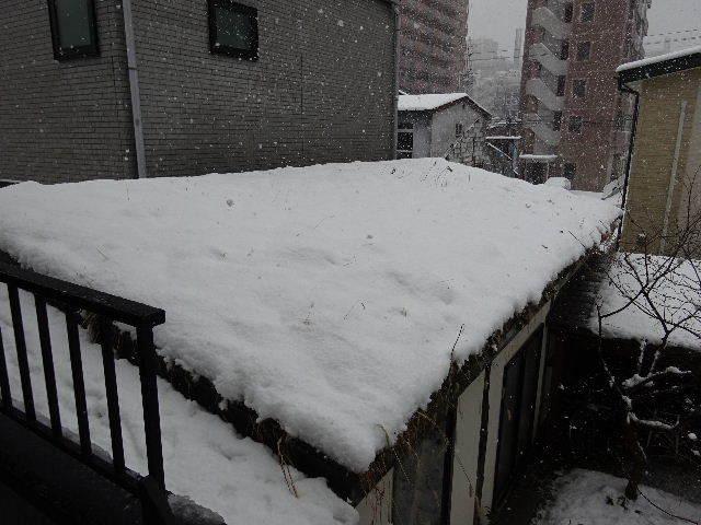 屋根緑化(草屋根)の今年一年を振り返る。_f0105112_04394660.jpg