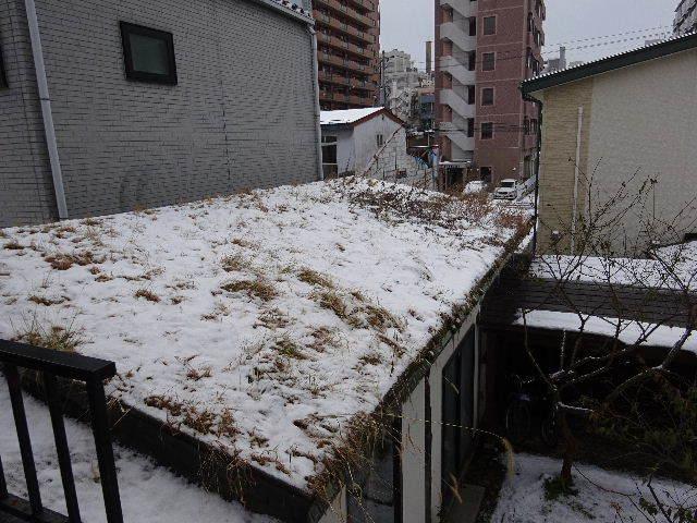 屋根緑化(草屋根)の今年一年を振り返る。_f0105112_04394683.jpg