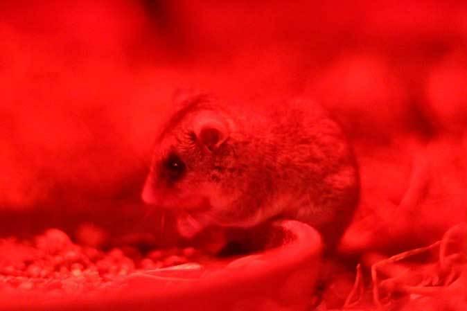 マヌルネコ「ナイマ」と小獣館の個性派たち(上野動物園)_b0355317_10461352.jpg