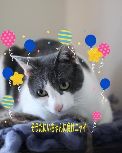 にゃんこ劇場「年末ご挨拶」_c0366722_22175146.jpeg