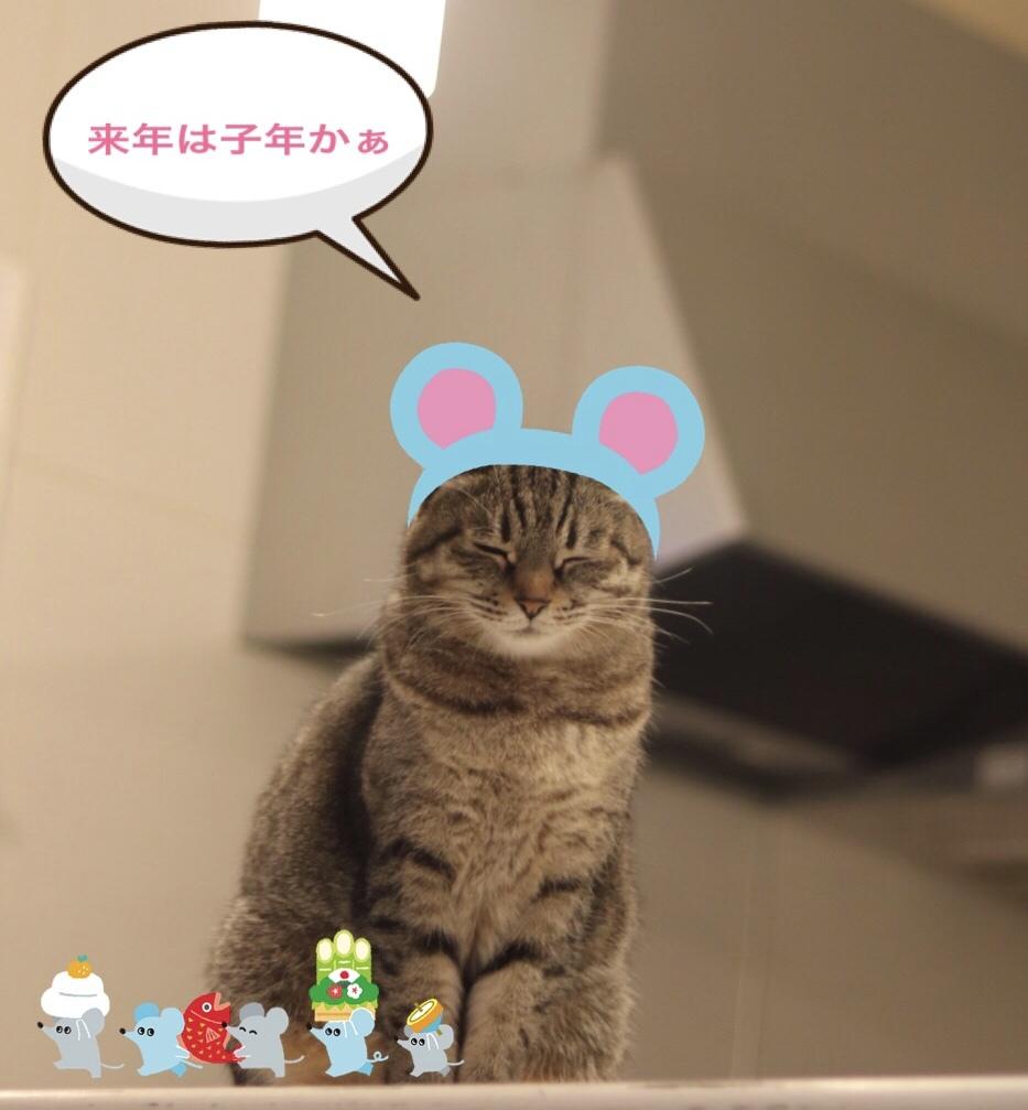 にゃんこ劇場「年末ご挨拶」_c0366722_22294704.jpeg