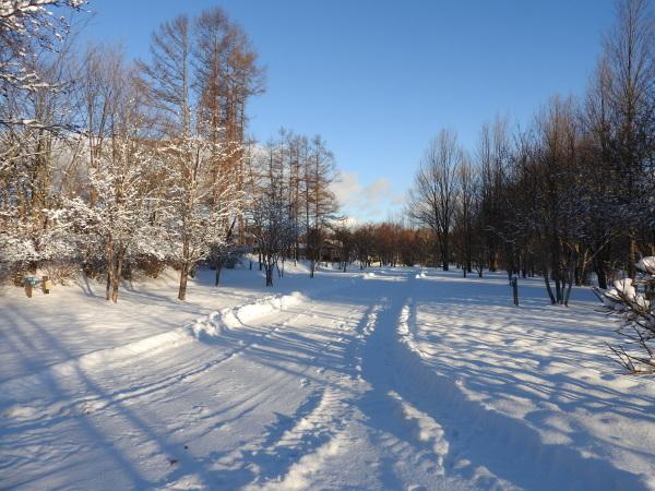 積雪約23cm!!道路は圧雪、ノーマルタイヤ危険(2019年12月28日)_b0174425_08385288.jpg