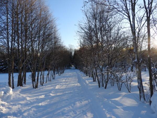 積雪約23cm!!道路は圧雪、ノーマルタイヤ危険(2019年12月28日)_b0174425_08393810.jpg