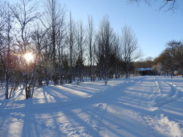 積雪約23cm!!道路は圧雪、ノーマルタイヤ危険(2019年12月28日)_b0174425_08394640.jpg