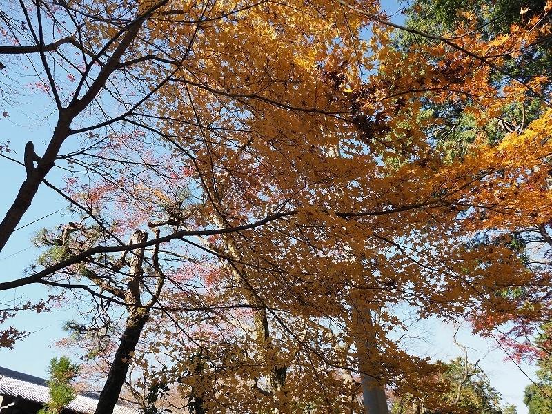 秋ではないけど_e0374932_08134696.jpg