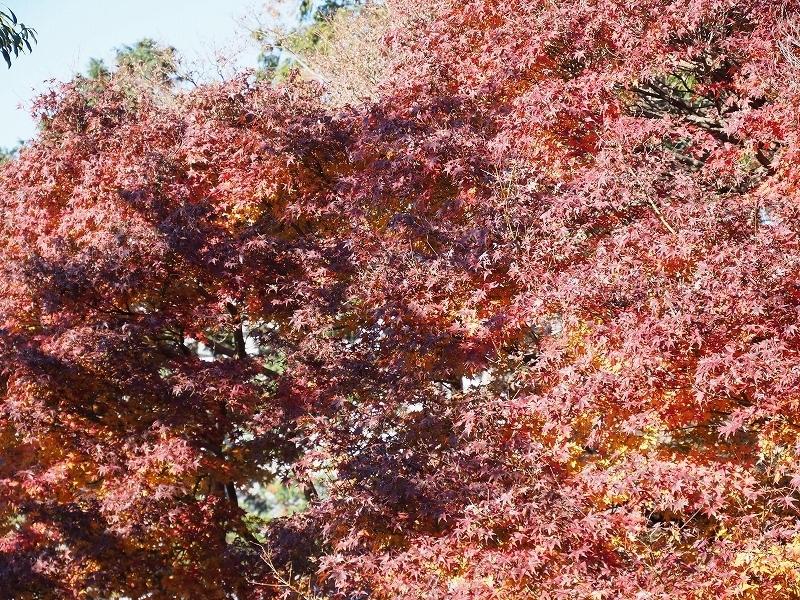 秋ではないけど_e0374932_08135291.jpg