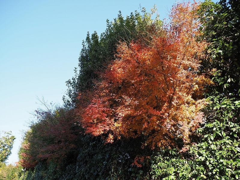 秋ではないけど_e0374932_08135565.jpg