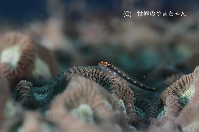 ぽかぽか陽気の川奈の海♪ 水温もまだまだあったかいですよ〜!_b0163039_16385028.jpg