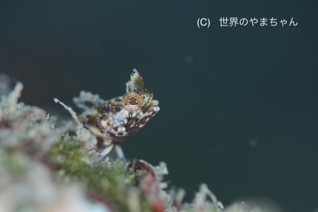 ぽかぽか陽気の川奈の海♪ 水温もまだまだあったかいですよ〜!_b0163039_16390326.jpg