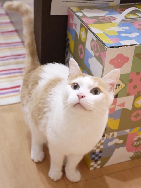 猫のお留守番 開くん編。_a0143140_20231657.jpg