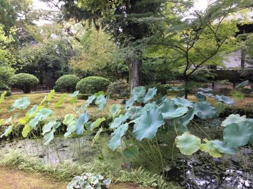 京都の旅\'19Ⅵ  京都秋の旅その1_e0326953_14351338.jpg