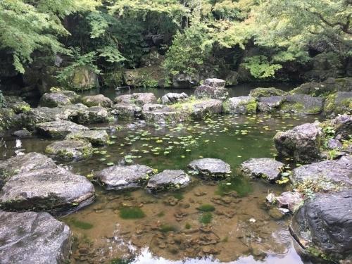 京都の旅\'19Ⅵ  京都秋の旅その1_e0326953_16081754.jpg