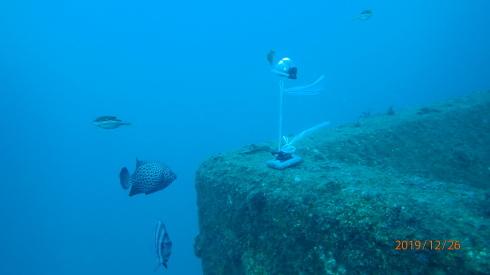 1228  第29回 人工魚礁研究会 波左間_b0075059_19263463.jpg