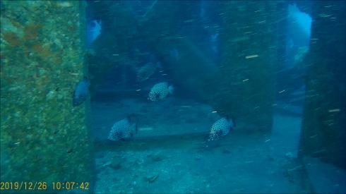 1228  第29回 人工魚礁研究会 波左間_b0075059_19340471.png