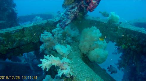 1228  第29回 人工魚礁研究会 波左間_b0075059_19351048.png