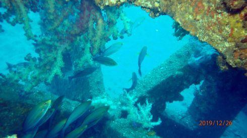 1228  第29回 人工魚礁研究会 波左間_b0075059_19443185.jpg