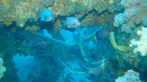 1228  第29回 人工魚礁研究会 波左間_b0075059_19472431.jpg