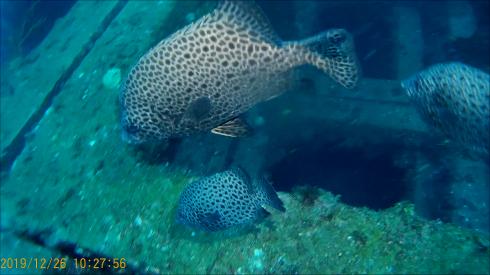 1228  第29回 人工魚礁研究会 波左間_b0075059_19510679.png