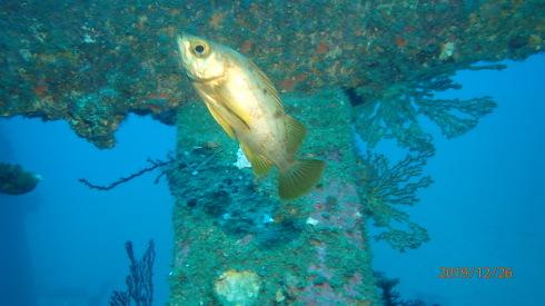 1228  第29回 人工魚礁研究会 波左間_b0075059_19554696.jpg
