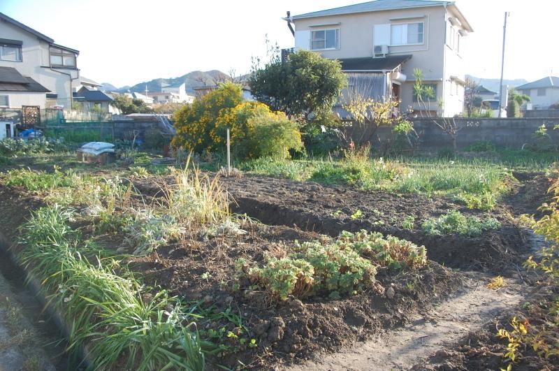 我が家の花壇のリニューアル作業継続中_c0108460_17535802.jpg