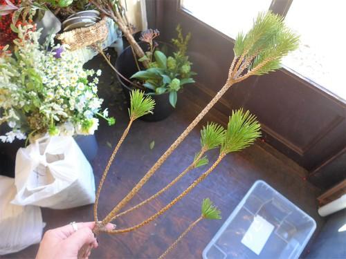 花修行 ~根引松と雲龍梅のお正月飾り~_f0232060_2332852.jpg