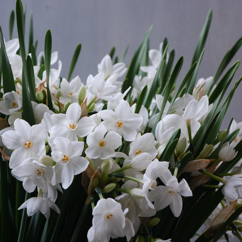 オークリーフ(今年最後のお店の花)_f0049672_07235529.jpg