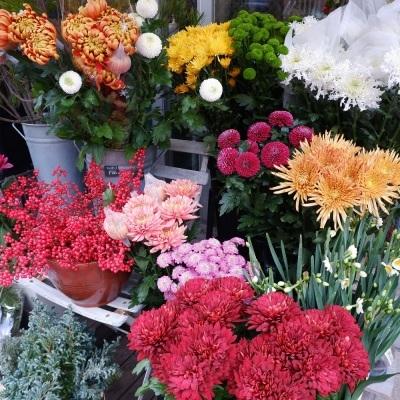 オークリーフ(今年最後のお店の花)_f0049672_07241099.jpg