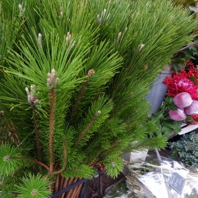 オークリーフ(今年最後のお店の花)_f0049672_07241303.jpg