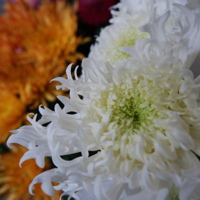 オークリーフ(今年最後のお店の花)_f0049672_07243212.jpg