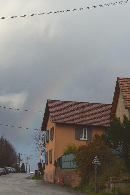虹の麓の青い鳥_b0346275_11214104.jpg