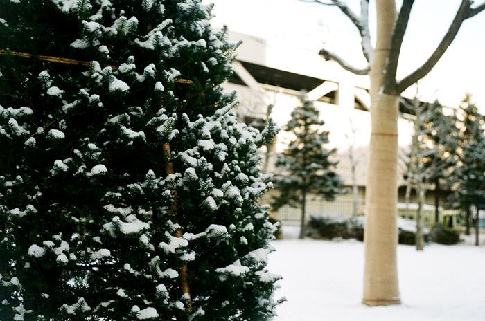 オンコの雪_c0182775_16353428.jpg