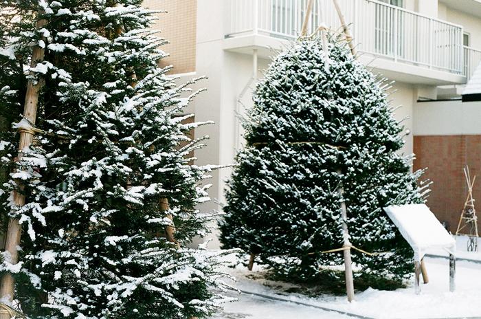 オンコの雪_c0182775_16415162.jpg