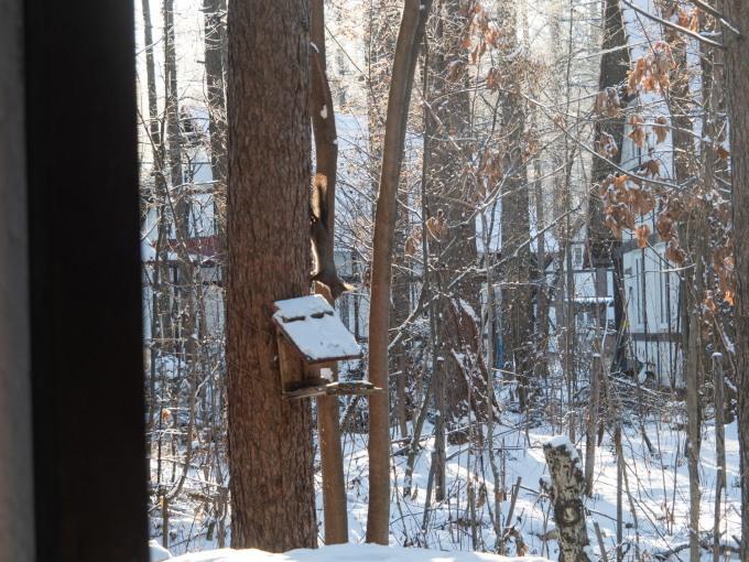マイナス17℃、霧氷の木々をエゾリス君が駆け回ります。_f0276498_12551621.jpg