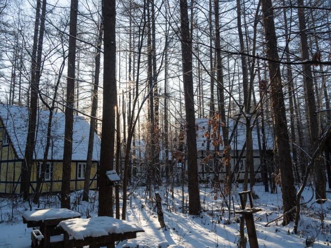 マイナス17℃、霧氷の木々をエゾリス君が駆け回ります。_f0276498_12553997.jpg