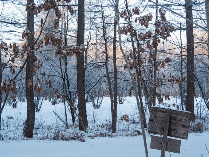 マイナス17℃、霧氷の木々をエゾリス君が駆け回ります。_f0276498_12560172.jpg