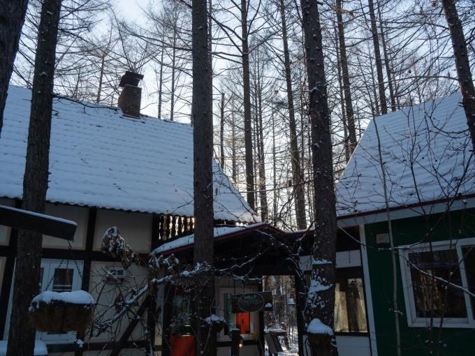 マイナス17℃、霧氷の木々をエゾリス君が駆け回ります。_f0276498_12561315.jpg