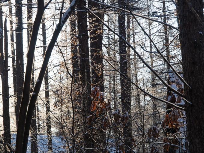 マイナス17℃、霧氷の木々をエゾリス君が駆け回ります。_f0276498_12565544.jpg